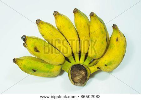 Ripe Cultivate Banana