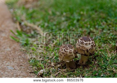 Walkway Siding Mushrooms
