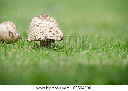Bright Mushrooms