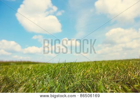Grassy field on a sunny summer day
