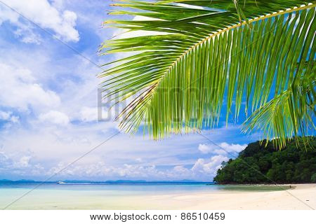 Island Lagoon Under Trees
