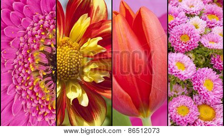 Collage Of Red Yellow And Pink Flowers