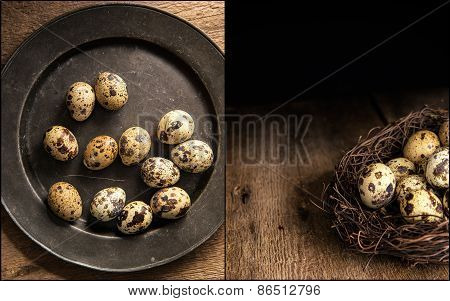 Compilation Of Moody Natural Lighting Setting Of Quaills Eggs With Vintage Retro Style