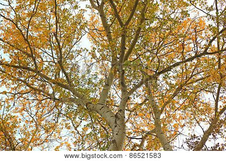 Branch Of A Tree With Yellow Leaves