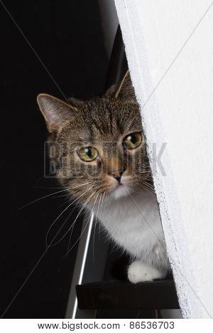 Cat Observe