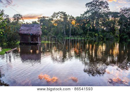 Amazon Rainforest At Sunset