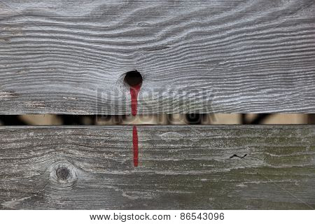 Old barn planks with blood red paint spilled from a hole.