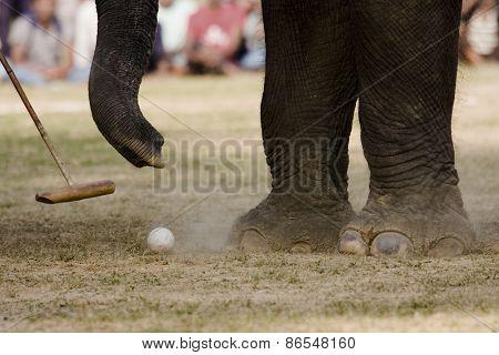 detail on elephant polo game, elephant paws and ball, Thakurdwara, bardia, Nepal