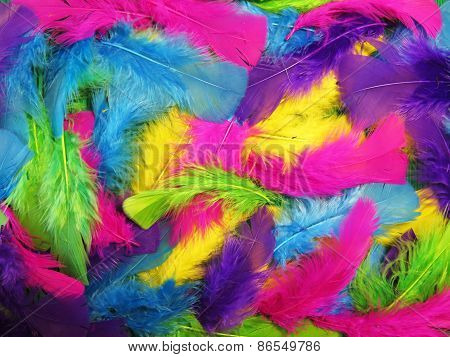 Jolly Background Of Colored Feathers