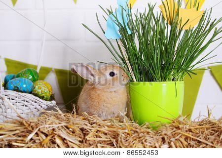 Easter Rabbit Eating Grass