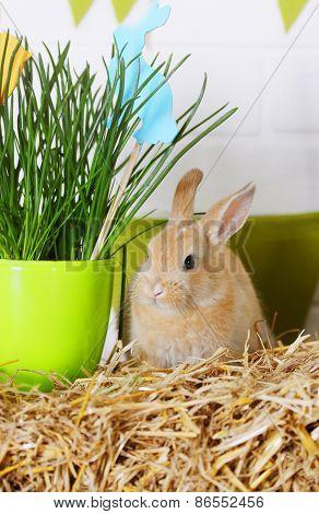 Rabbit Near The Grass