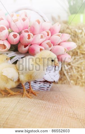 Bouquet Of Tulips And Chickens