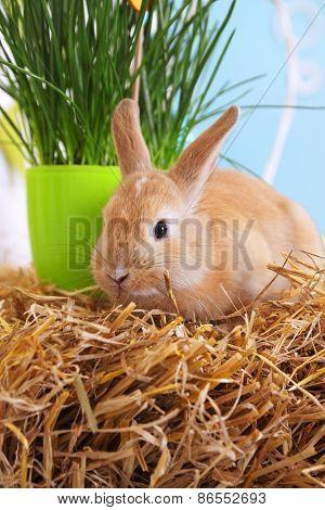 Live Rabbit On The Hay