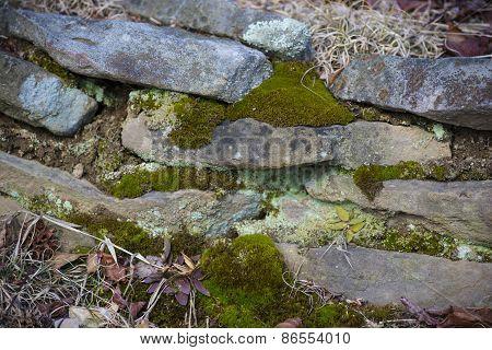 Slate Wall With Moss