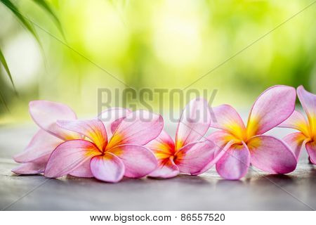 Tropical Frangipani on wooden table for spa and wellness concept