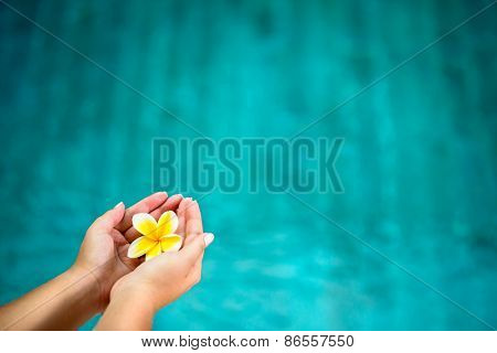 frangipani flower in female hands over water