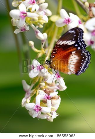 Gorgeous, exotic butterfly on the flowers early in the morning