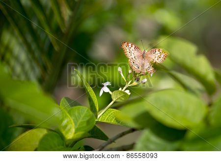 lovely butterfly over green nature background