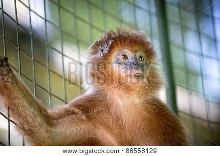 cute monkey standing next to the grid in a cage