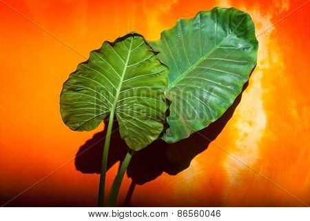 green leaves against orange wall
