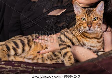 Bengal cat in her hands.