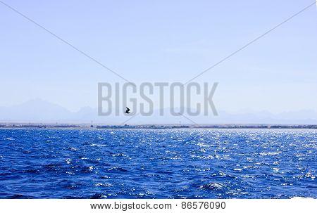 Seagull Flying Near The Ship.