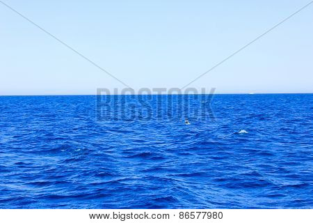 Sea Blue Water Background