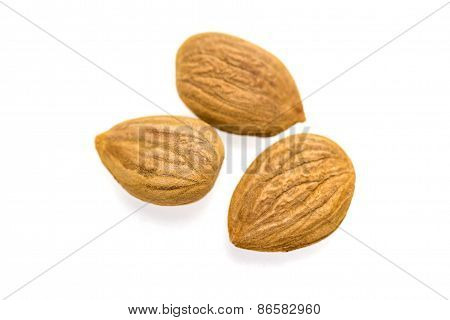 Apricot Kernel / Nuts Isolated On White Background.
