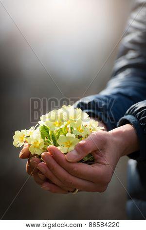 Hand Full Of Primroses