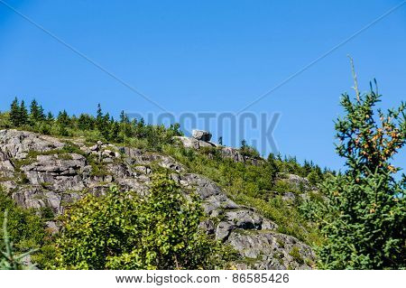 Greenery Over Rocky Hill