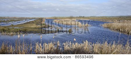 Greylake Restored Wetlands