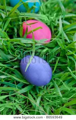 Violet And Pink Eggs In The Grass