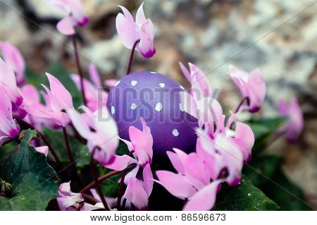 Dotted Purple Egg In Cyclamens