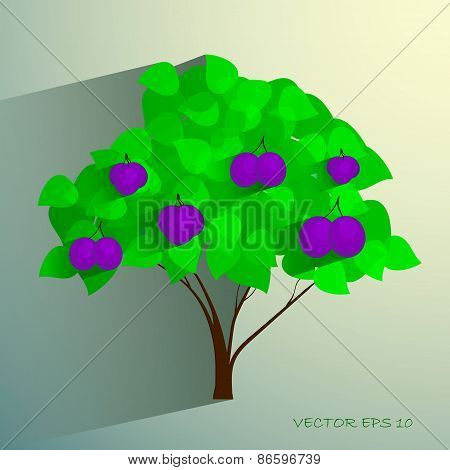 Decorative plum tree with ripe fruits