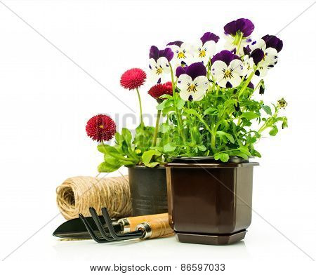 Pansies And Daisies In Pots With Garden Tools