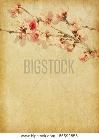 Old paper with peach blossom.   Selective Focus. Focus on near  flowers.