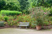picture of banquette  - bench in a beautiful park - JPG