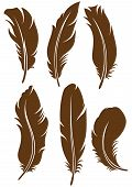 pic of feathers  - Symbol feathers - JPG