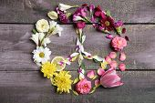 picture of peace  - Peace symbol of beautiful flowers - JPG