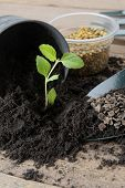 stock photo of household farm  - plant on black soil with gardening tools - JPG