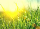 stock photo of sun flare  - Grass - JPG