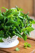 picture of italian parsley  - Italian Parsley - JPG