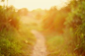 picture of sunny season  - De focused path on sunset natural bokeh background - JPG