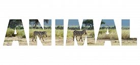 stock photo of jungle animal  - Background with word  - JPG