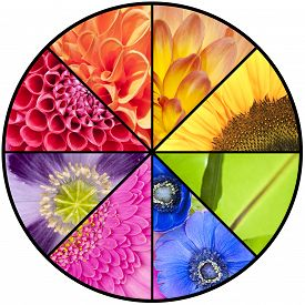 picture of windflowers  - Rainbow collage of red orange yellow green blue pink violet purple colors of Dahlia Sunflower Fern leaf Anemone Windflower Gerbera and Poppy flowers in closeup and in a circular wheel frame - JPG