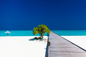 stock photo of jetties  - Beautiful beach with wodden jetty and single small tree in Maldives - JPG