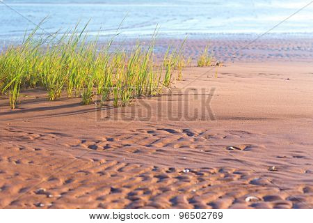 Beach grass on a Prince Edward Island beach.