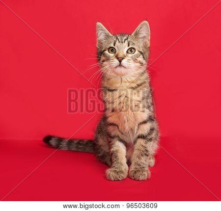Tabby Kitten Sitting On Red