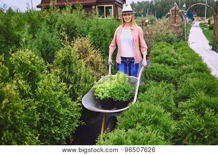 Happy young woman with wheelbarrow carting seedlings