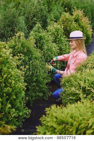 Female gardener taking care of green thuja bushes